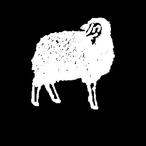 Ovino